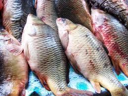Какая рыба защитит от ожирения