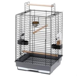Жако – серый попугай