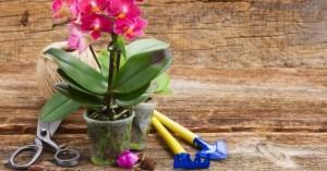 Как правильно пересаживать орхидеи