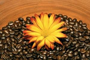Кофейное обвертывание в домашних условиях