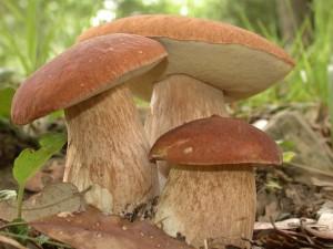 Приготовление грибов и типичные ошибки
