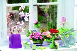 Первоцветы – первые весенние цветы на балконе