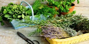 Сбор трав для очищения организма