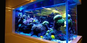 Как ухаживать за промышленным аквариумом?