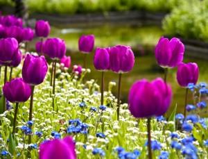 Цветы в жизни